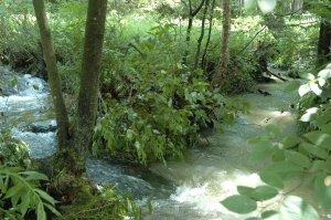 Where two streams meet
